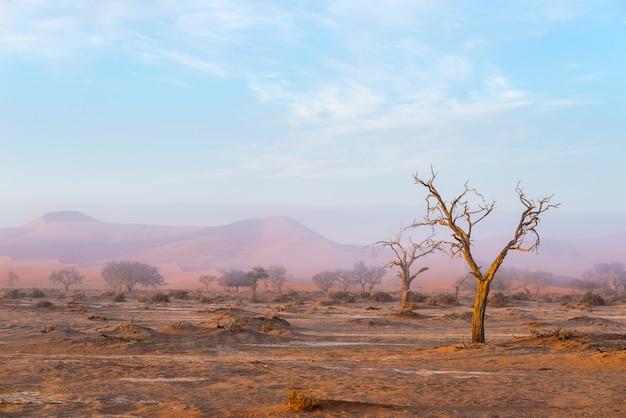 アカシアの木と赤い砂丘の編組。 Premium写真
