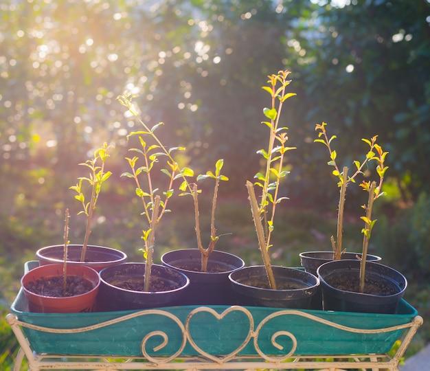 自家製の有機ザクロセット、花瓶、バックライト Premium写真