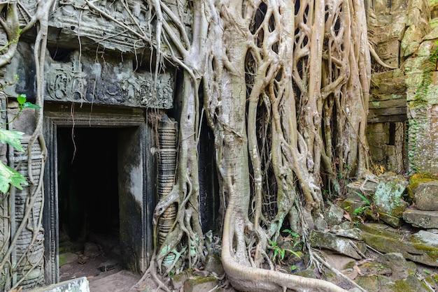 アンコール寺院を受け入れるタ・プロームの有名なジャングルの木の根 Premium写真