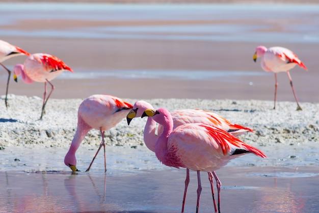 ピンクのフラミンゴ Premium写真