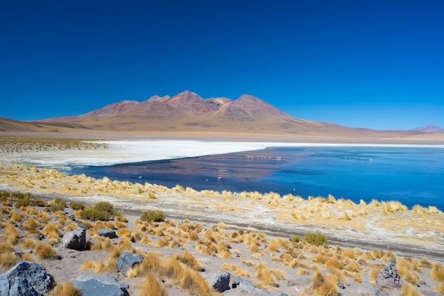 ボリビアのアンデスのフラミンゴと青い塩湖 Premium写真