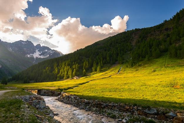 日没時に咲く高山草原と緑豊かな森林の高地山脈を流れるストリーム Premium写真