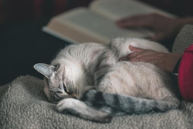 Женщина читает книгу обнимаются домашняя кошка, лежа на боку. Premium Фотографии