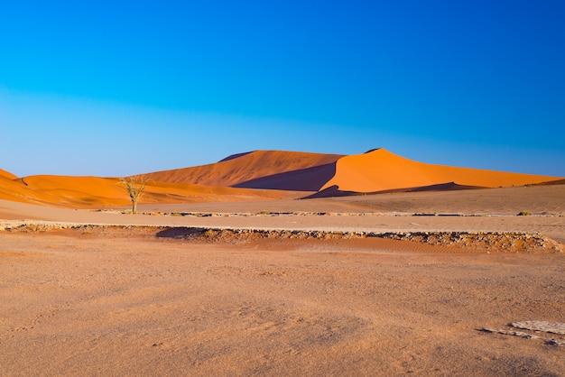 Песчаные дюны в пустыне намиб на рассвете, путешествие по чудесному национальному парку намиб науклуфт. Premium Фотографии