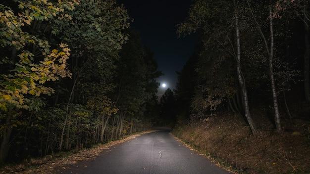 Пустое пересечение дорог соснового леса, освещенное луной. одиночество и страх. Premium Фотографии