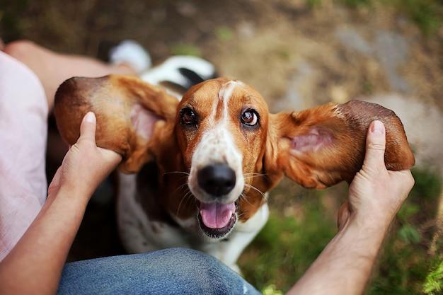 バセットハウンドは飼い主と遊びます。男と女の電車と耳でうれしそうな面白い犬と遊ぶ。 Premium写真