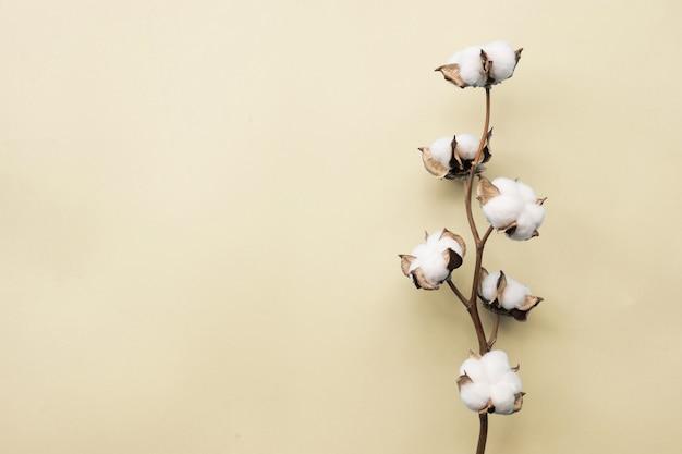 パステル淡い黄色の紙の背景に綿の花 Premium写真