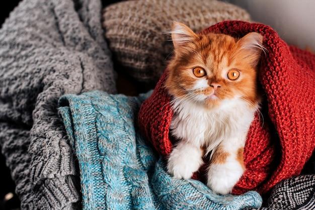 ウールニット服コピースペースのヒープでふわふわ生姜子猫。 Premium写真