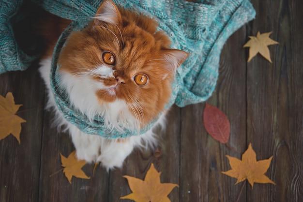 Пушистый кот сидит на деревянном столе в окружении сухих осенних листьев. Premium Фотографии