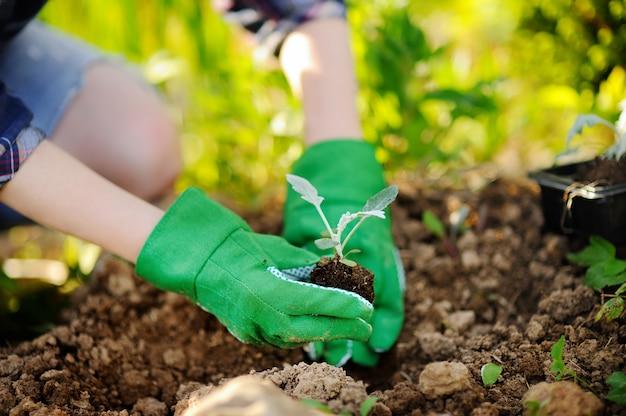 夏の晴れた日に庭のベッドで苗を植える女 Premium写真
