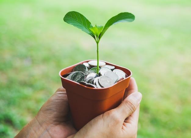 植物の成長と鍋に両手お金 Premium写真