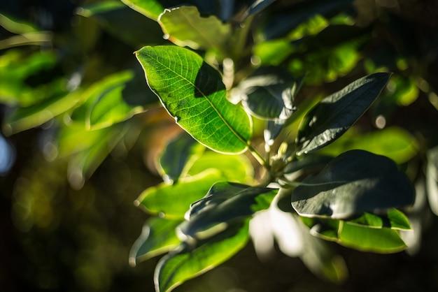 開花する自然の葉の屋外植物 無料写真