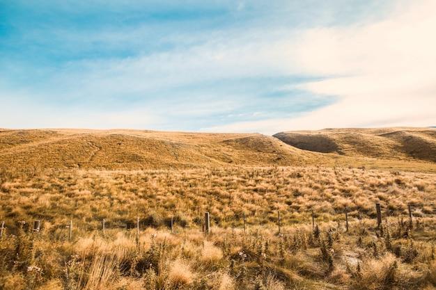 Газон Трава Луг, Трава фон, трава поле и деревья под белыми ... | 417x626