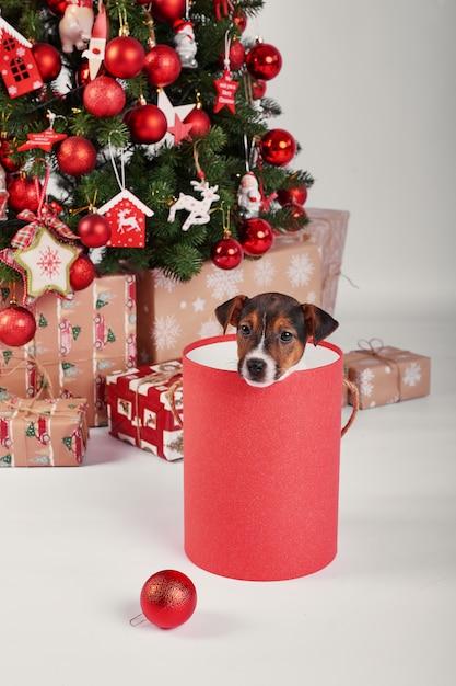 新年のインテリアの子犬ジャックラッセルテリア Premium写真