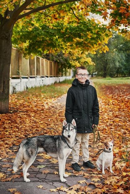 Ребенок мальчик с хаски и джек рассел терьер гуляет в парке осенью Premium Фотографии