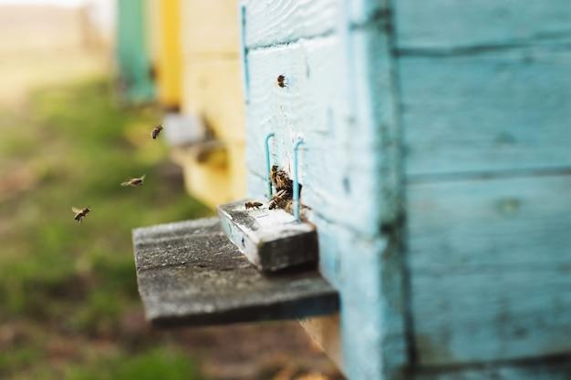 ミツバチの巣箱の細部をクローズアップ。 Premium写真