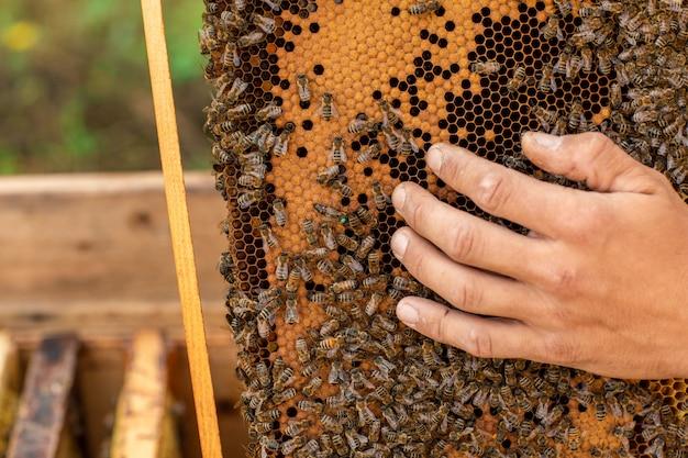 蜂の完全なハニカムを保持している養蜂家のクローズアップ Premium写真