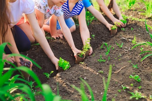 世界のレスキューの概念として一緒に黒い土に若い木を植える子供の手 Premium写真
