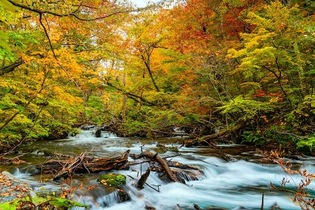 Вид на реку ойрасе через лес разноцветной осенней листвы и зеленых мшистых скал Premium Фотографии