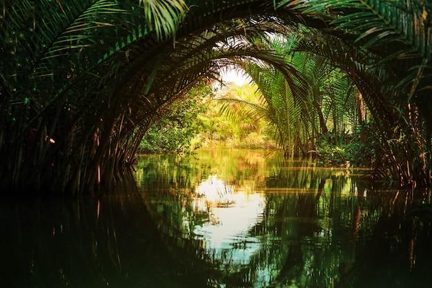 ニパパームまたはニパフルティカンズ川のワームの静かなシーン Premium写真