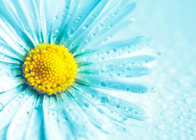 Цветок ромашка в бирюзовый на фоне природы Premium Фотографии