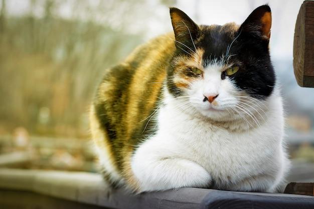 猫は通り、クローズアップ、正面にあります。 Premium写真