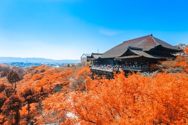 Осенние листья в храме чистой воды, япония Premium Фотографии