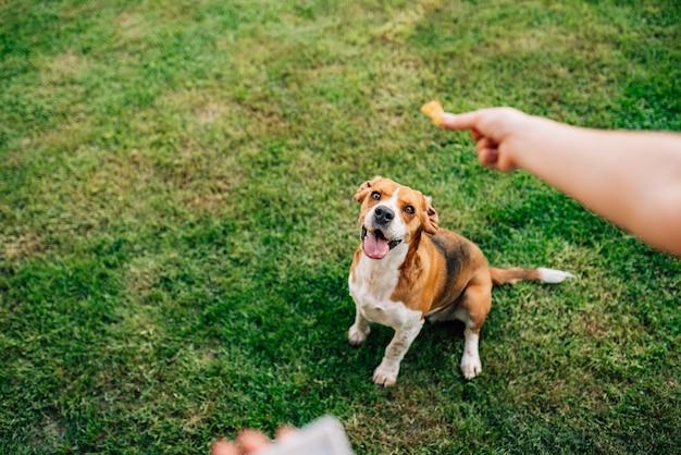 おやつに幸せな犬を餌します。 Premium写真