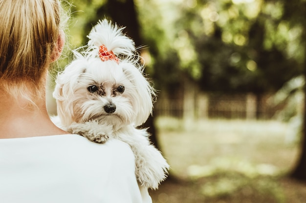 Собака и его владелец, счастливая женщина держит белую мальтийскую собаку. Premium Фотографии