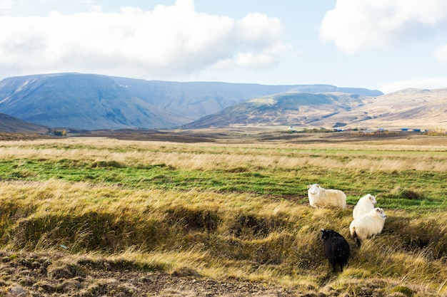 アイスランドの草原 無料写真