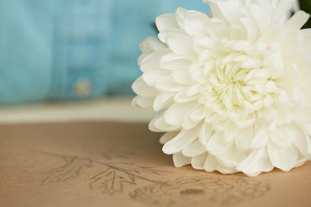 テーブルに新鮮な菊 無料写真