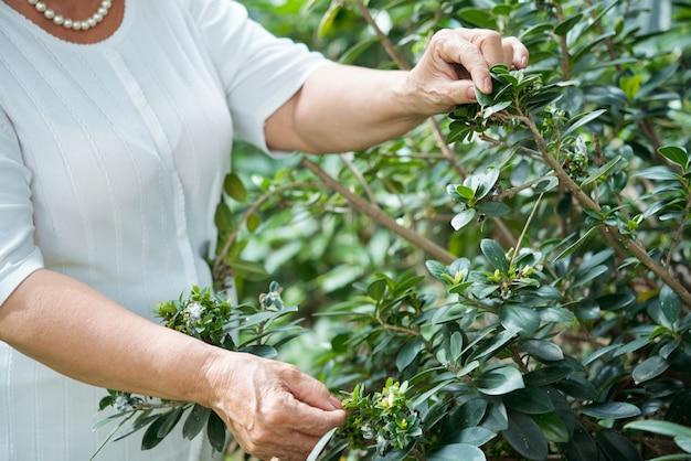 認識できない老婦人が庭の緑の植物のそばに立って、葉に触れる 無料写真