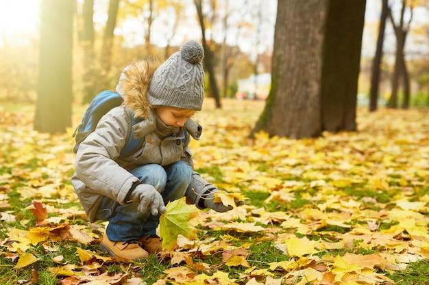 葉を拾う 無料写真
