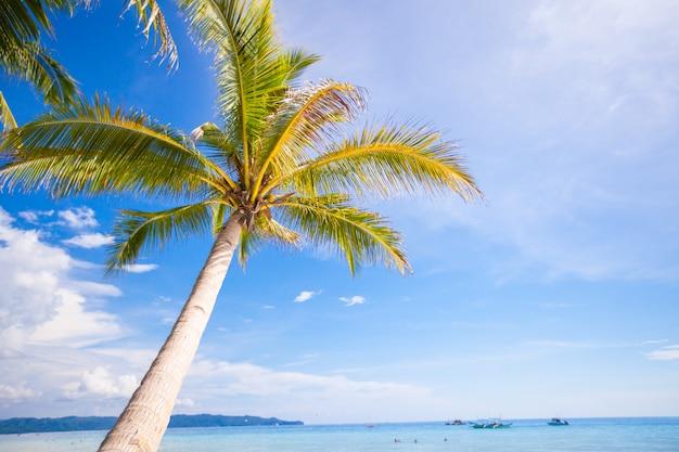 Кокосовая пальма на песчаном пляже и голубое небо. Premium Фотографии