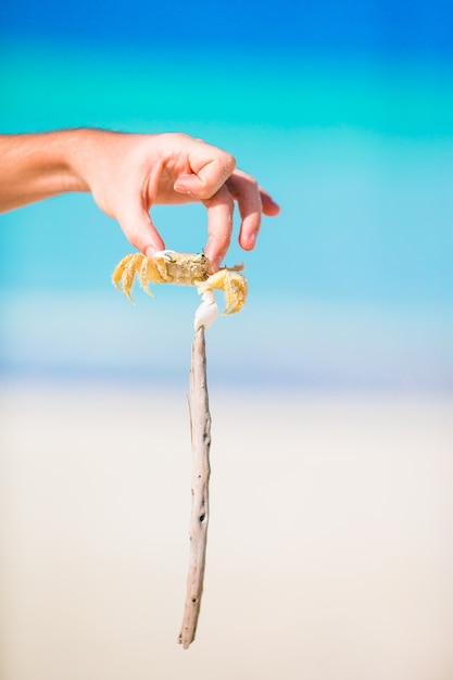 白いビーチでクローズアップライブカニ Premium写真