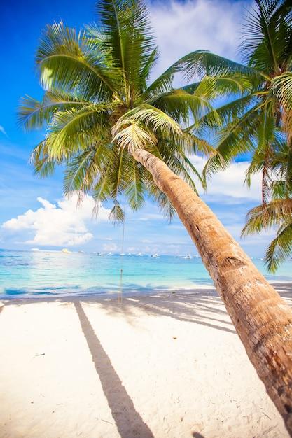 Кокосовая пальма на белом песчаном пляже Premium Фотографии