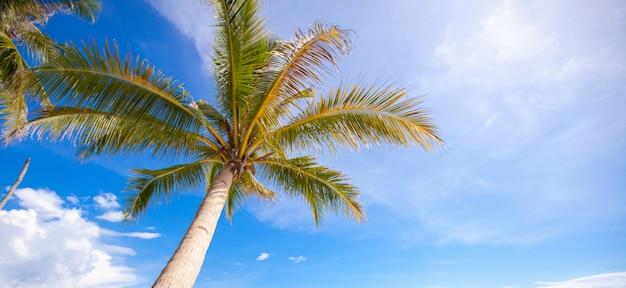 Кокосовая пальма на песчаном пляже фоне голубого неба Premium Фотографии