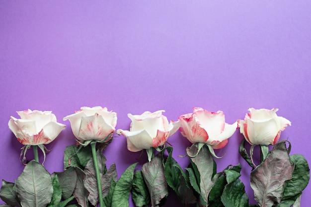 お祝い花イングリッシュローズパープルのコンポジション Premium写真