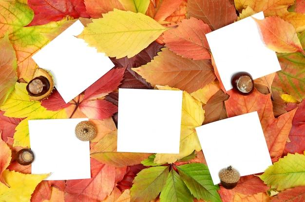 秋の葉と紙 Premium写真