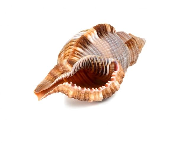 Морская ракушка Premium Фотографии