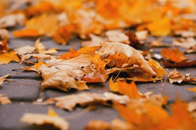 公園の地面に紅葉します。秋のコンセプト Premium写真