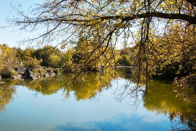 秋の池、黄色の葉 Premium写真