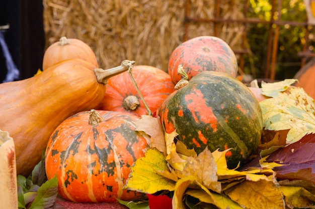 ハロウィーンの美しいカボチャと秋の紅葉の装飾。 Premium写真