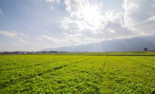 サニー草原風景 無料写真