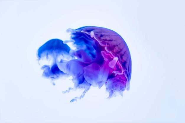 Танцующие медузы в глубине моря Premium Фотографии