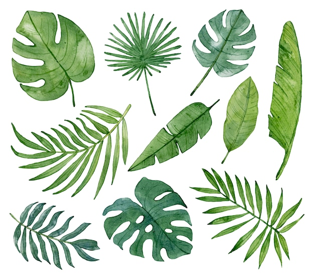 水彩の熱帯の緑の葉が分離されました。 Premium写真