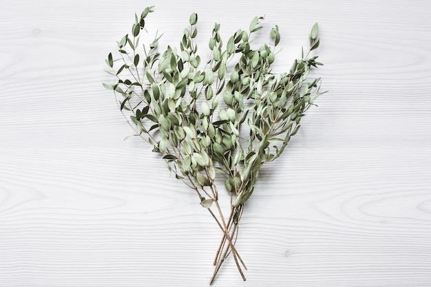 白い木のユーカリの木の緑の枝 Premium写真