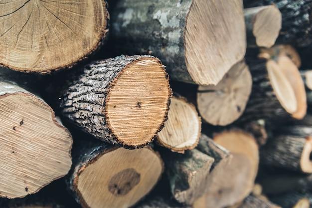 冬に収穫された木 Premium写真