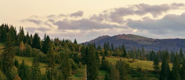 曇り空と日没後のカルパティア山脈の松林のパノラマビュー Premium写真