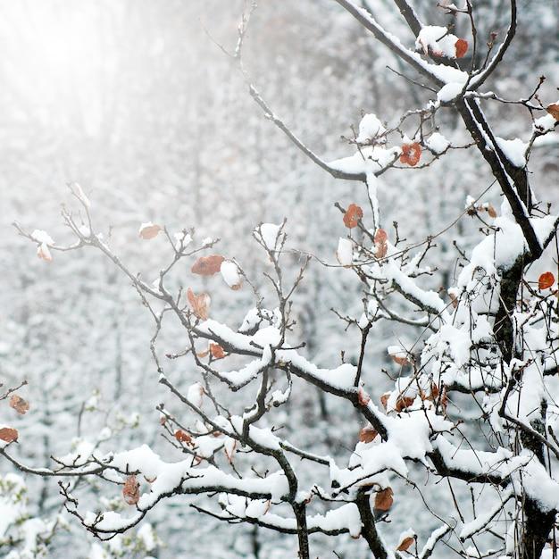 ツリー日当たりの良い屋外ブルーピンク 無料写真